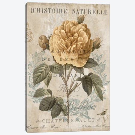Botanique II Canvas Print #DEV36} by Deborah Devellier Art Print