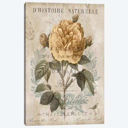 Botanique II Canvas Print #DEV4} by Deborah Devellier Canvas Art Print