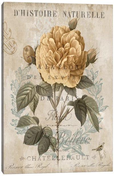 Botanique II Canvas Art Print