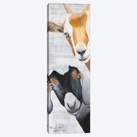 Shenanigans Canvas Print #DFI14} by Diane Fifer Canvas Art
