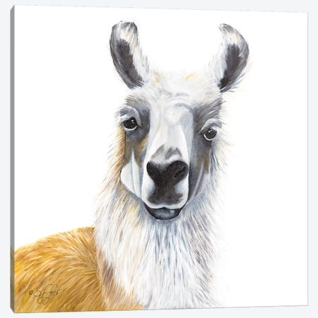 Alpaca Canvas Print #DFI22} by Diane Fifer Canvas Wall Art
