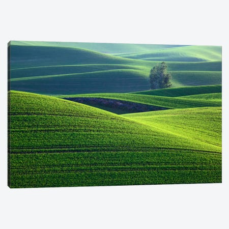 Rolling Hills, Palouse, Washington, USA Canvas Print #DFL10} by Dennis Flaherty Canvas Wall Art