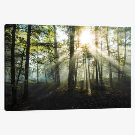 Light and Trees Canvas Print #DFO4} by Doug Foulke Canvas Artwork
