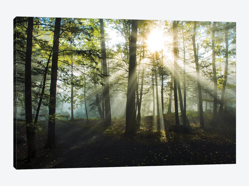Light and Trees by Doug Foulke 1-piece Canvas Artwork