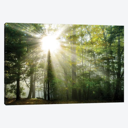Light and Trees II Canvas Print #DFO5} by Doug Foulke Canvas Wall Art