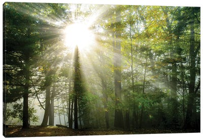 Light and Trees II Canvas Art Print