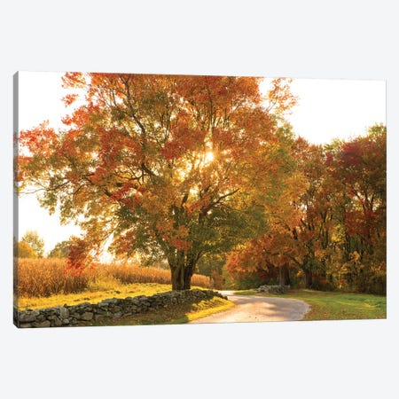 Maple Tree Drive Canvas Print #DFO6} by Doug Foulke Canvas Wall Art