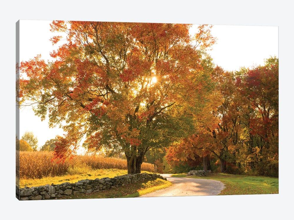 Maple Tree Drive by Doug Foulke 1-piece Canvas Wall Art
