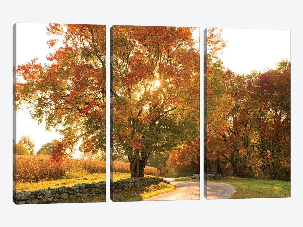 Maple Tree Drive by Doug Foulke 3-piece Canvas Artwork