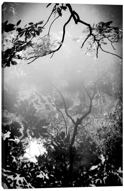 Daydream Canvas Print #DFU11