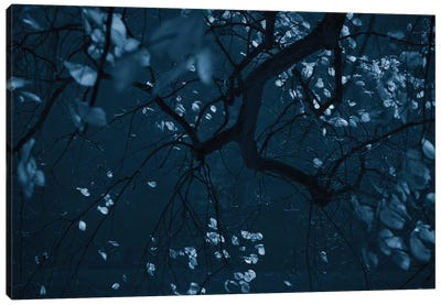 Fall Night Canvas Art Print