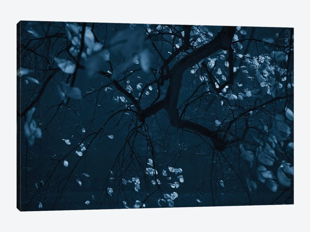 Fall Night by Dorit Fuhg 1-piece Canvas Art Print