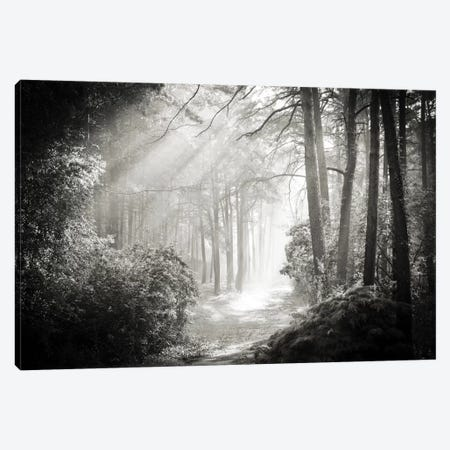Into The Forest II Canvas Print #DFU14} by Dorit Fuhg Canvas Artwork