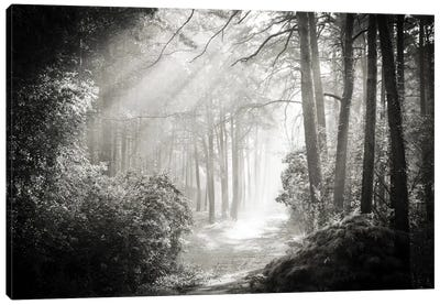 Into The Forest II Canvas Art Print