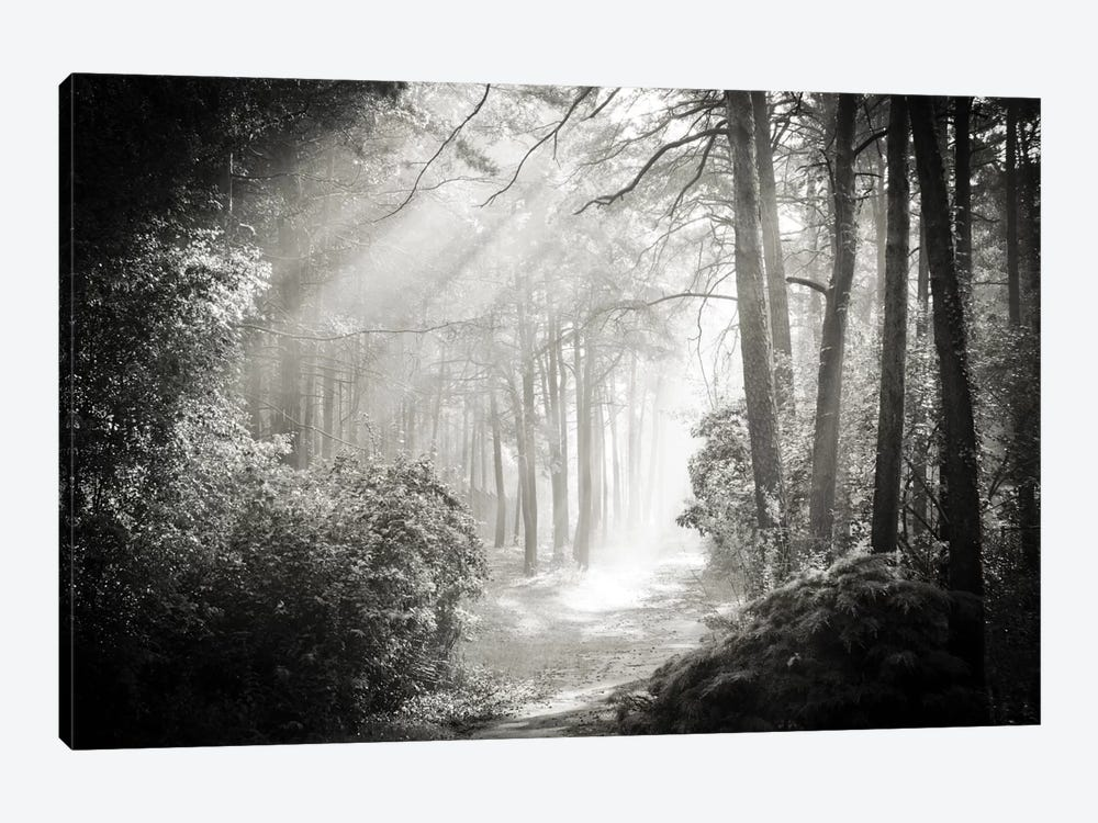 Into The Forest II by Dorit Fuhg 1-piece Canvas Print