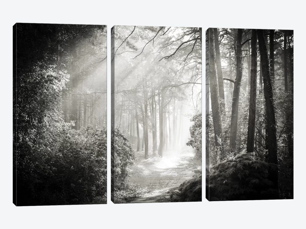 Into The Forest II by Dorit Fuhg 3-piece Art Print