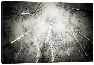 Into The Forest V Canvas Art Print