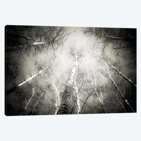 Into The Forest V Canvas Print #DFU15} by Dorit Fuhg Canvas Artwork