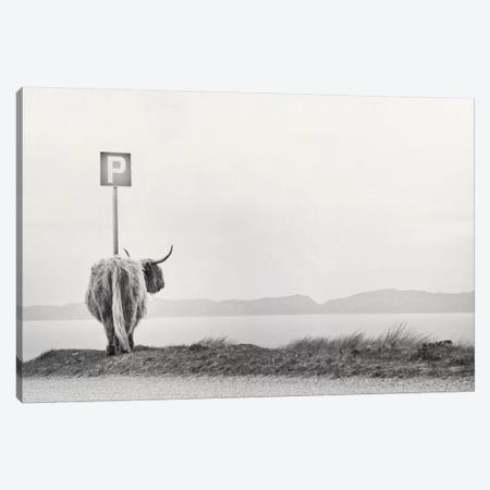 Highland Visitor Canvas Print #DFU1} by Dorit Fuhg Canvas Art
