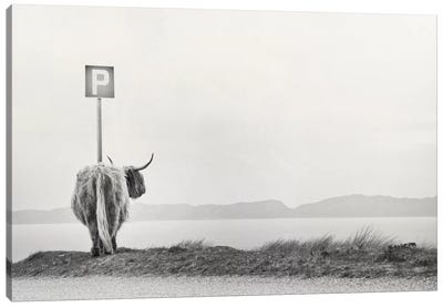 Highland Visitor Canvas Art Print