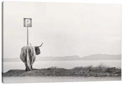 Highland Visitor Canvas Art Print