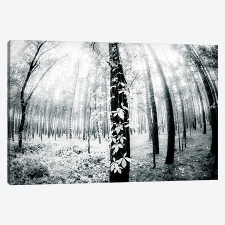 Between Canvas Print #DFU34} by Dorit Fuhg Canvas Artwork
