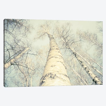 Birch Trees II 3-Piece Canvas #DFU35} by Dorit Fuhg Canvas Artwork