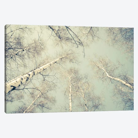 Birch Trees III Canvas Print #DFU36} by Dorit Fuhg Canvas Artwork