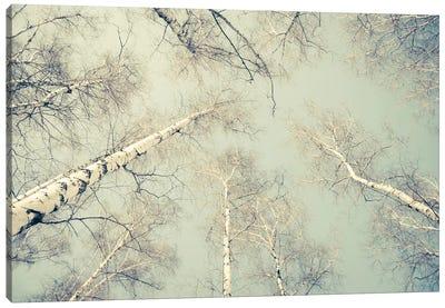 Birch Trees III Canvas Art Print