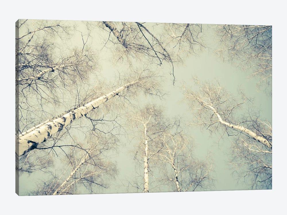 Birch Trees III by Dorit Fuhg 1-piece Art Print