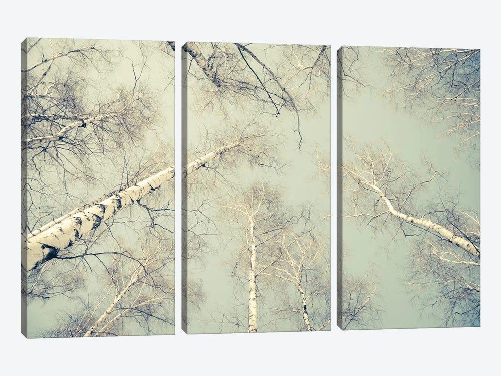 Birch Trees III by Dorit Fuhg 3-piece Canvas Art Print