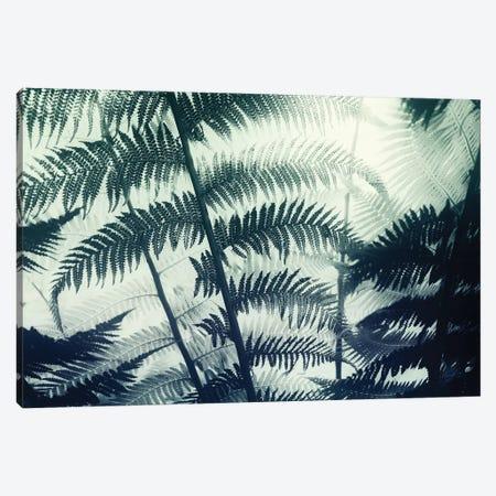 Botanical II Canvas Print #DFU40} by Dorit Fuhg Canvas Wall Art