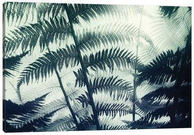 Botanical II Canvas Art Print