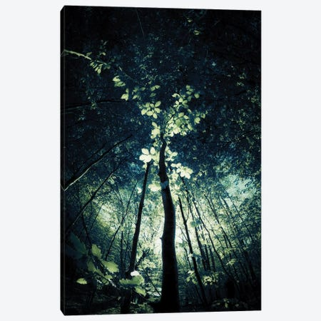 Canopy Canvas Print #DFU41} by Dorit Fuhg Canvas Artwork