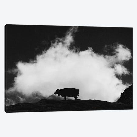 Cow And Cloud Canvas Print #DFU47} by Dorit Fuhg Canvas Art Print