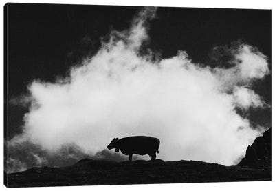 Cow And Cloud Canvas Art Print
