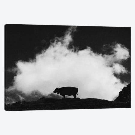 Cow And Cloud Canvas Print #DFU47} by Dorit Fuhg Canvas Art Print