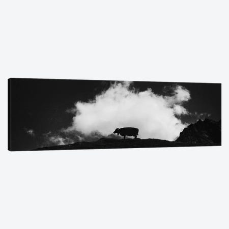 Cow And Cloud Panoramic Canvas Print #DFU48} by Dorit Fuhg Canvas Artwork