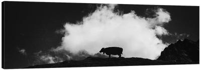 Cow And Cloud Panoramic Canvas Art Print
