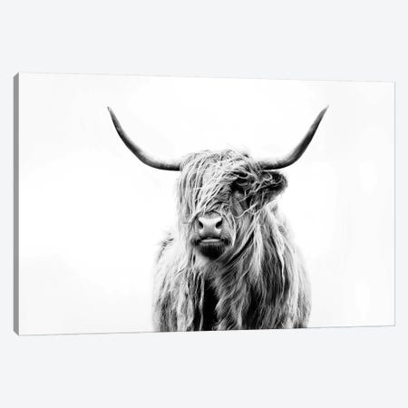Portrait Of A Highland Cow Canvas Print #DFU4} by Dorit Fuhg Canvas Art Print