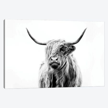 Portrait Of A Highland Cow 3-Piece Canvas #DFU4} by Dorit Fuhg Canvas Art Print