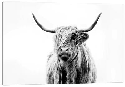 Portrait Of A Highland Cow Canvas Art Print