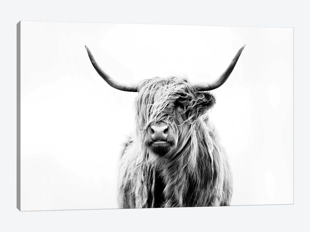 Portrait Of A Highland Cow by Dorit Fuhg 1-piece Canvas Artwork