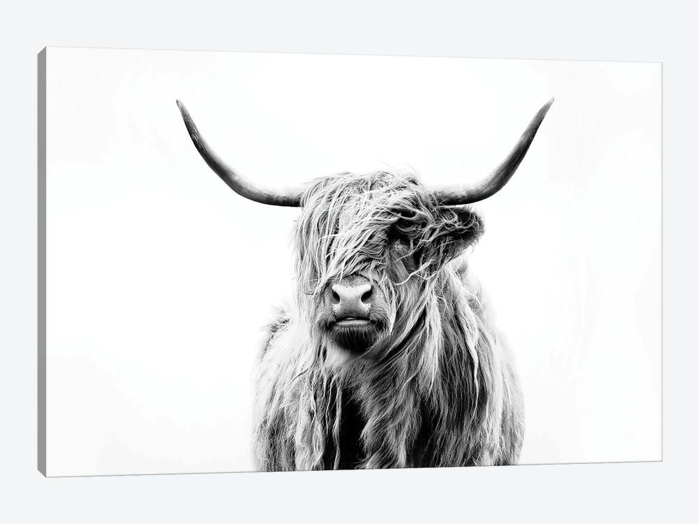 Portrait Of A Highland Cow by Dorit Fuhg 1-piece Canvas Artwork