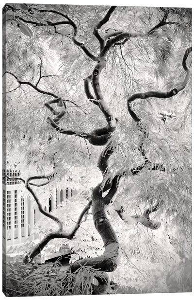 Dream Tree Canvas Art Print
