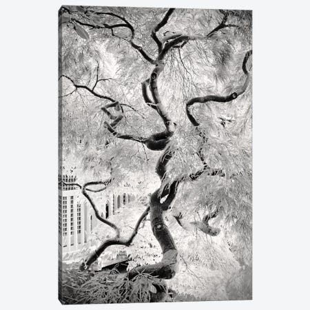 Dream Tree 3-Piece Canvas #DFU50} by Dorit Fuhg Art Print