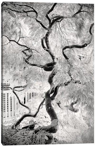 Dream Tree Canvas Art Print