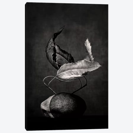 El Tango Canvas Print #DFU52} by Dorit Fuhg Art Print