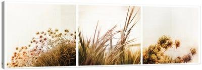 Adagio Triptych Canvas Print #DFU5