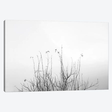 Possibly Canvas Print #DFU62} by Dorit Fuhg Canvas Art